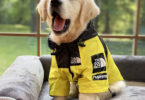 sweat à capuche pour chiens