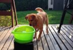 lanceur de balles pour chiens